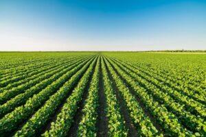 Articoli sull'Agricoltura